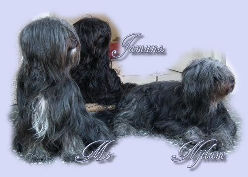 steh for terrier hund